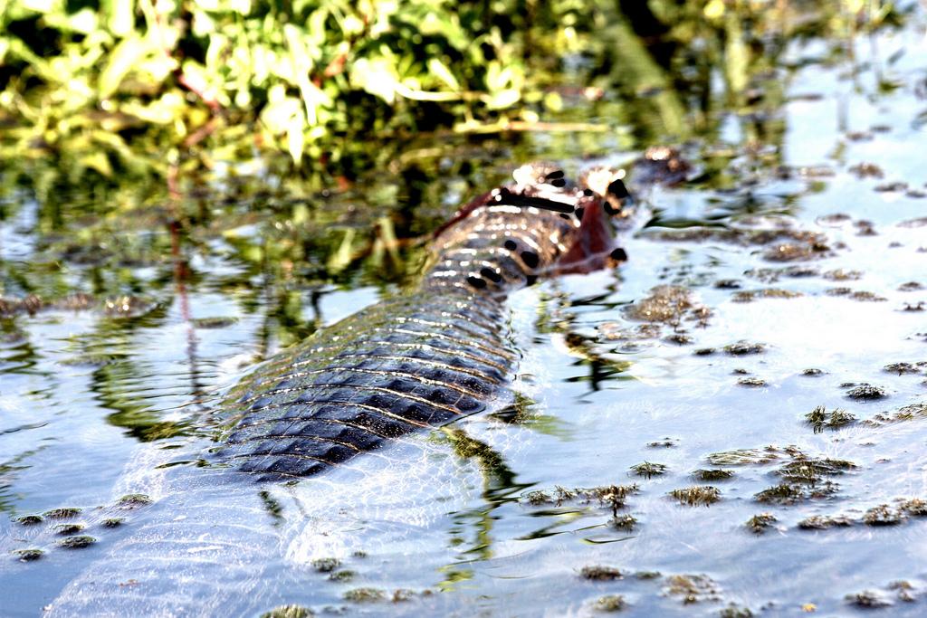 pantanal brésil